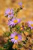 Photo by Walt Hester<br /> Flowers bloom along the Fish Creek Trail on Wednesday.