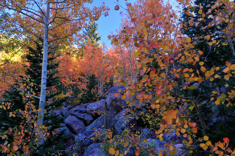 Photo by Walt Hester<br /> Foliage erupts in shades of green gold and orange in Rocky Mountain National Park on Tuesday. The foliage will continue to turn, starting at higher elevations and working it's way down the mountain sides for the next few weeks.