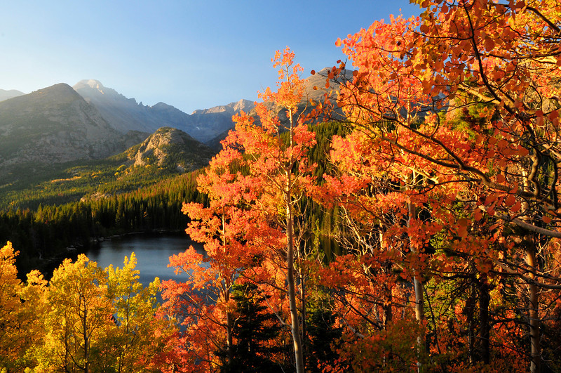 Photo by Walt Hester<br /> Fall aspens stand out against the cloudless, though smoke-hazy, mountain sky on Monday.