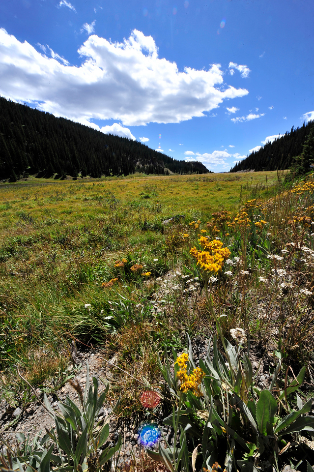 03EP StndAln Milner Pass View.jpg Photo by Walt Hester<br /> A few blooms poke out near Poudre Lake at Milner Pass on Wednesday.