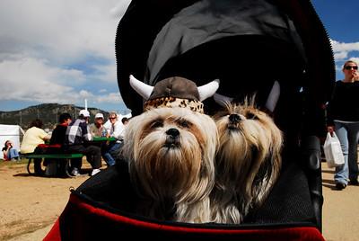 "Photo by Walt Hester Viking ""helmets"" adorn dogs at the Longs Peak Scottish-Irish Highland Festival on Sunday."
