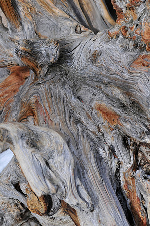 Walt Hester | Trail-Gazette<br /> Patterns form in the grain of a weathered, old snag near Nymph Lake on Wednesday.