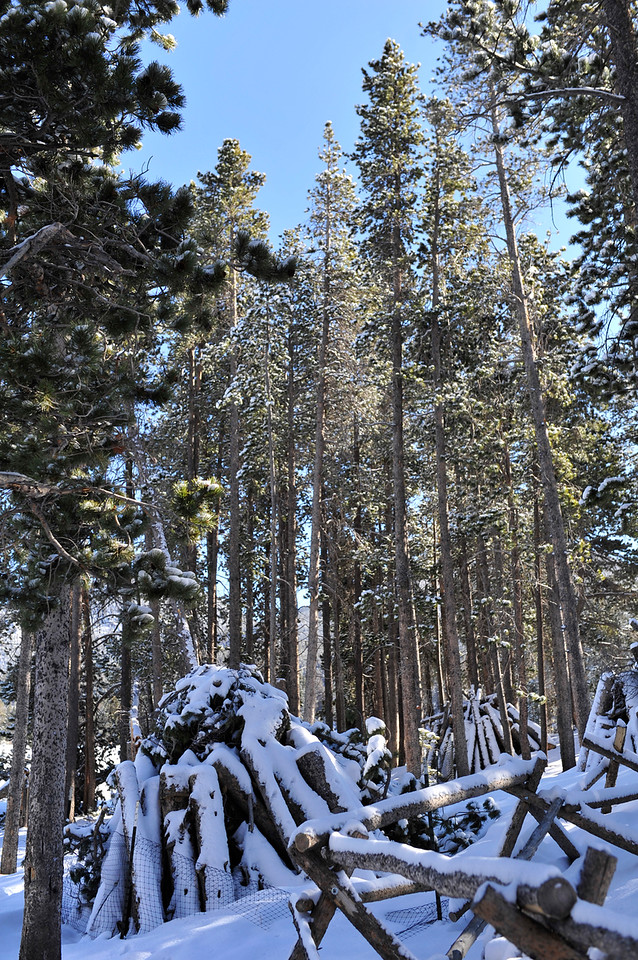 Walt Hester | Trail Gazette<br /> Snow-covered and fenced off snag piles await burning at Sprague Lake. As of the weekend, the park had closed the trail around the lake due to the danger posed by more trees that could fall at any time.