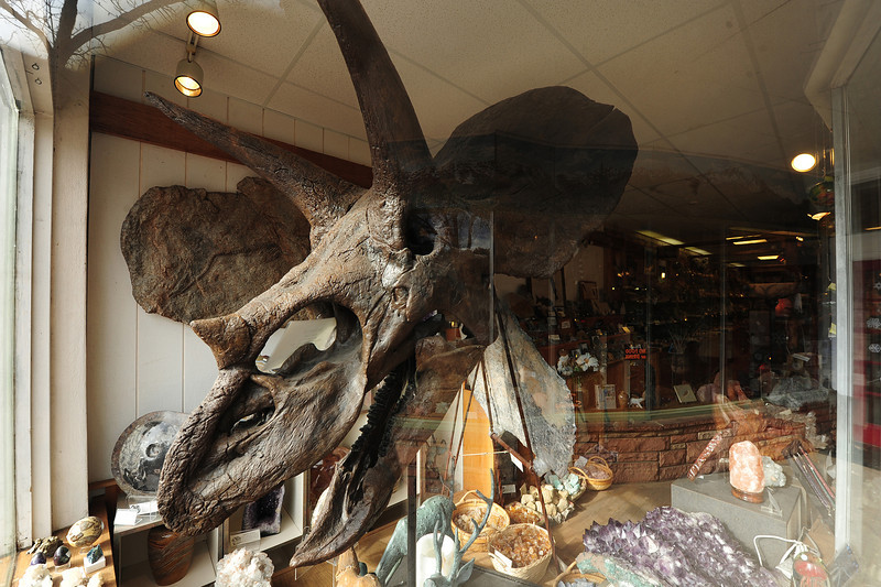 A cast of a triceratops skull sits in the window of Nature's Own on Elkhorn Avenue. The dino head is often decorated for holidays.