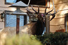 Walt Hester | Trail Gazette<br /> A bull elk raids bird feeders at McGregor Mountain Lodge on Wednesday. While bears hide away for the winter, elk still prowel for easy eats.