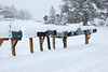 A row of mailboxes have a cap of fresh snow, the result of a Feb. 3 storm that dropped close to 10 inches of snow in the Estes Valley by mid-morning Friday. More snow was expected throughout the day and into the weekend. Sunny skies were forecast to return by Sunday.