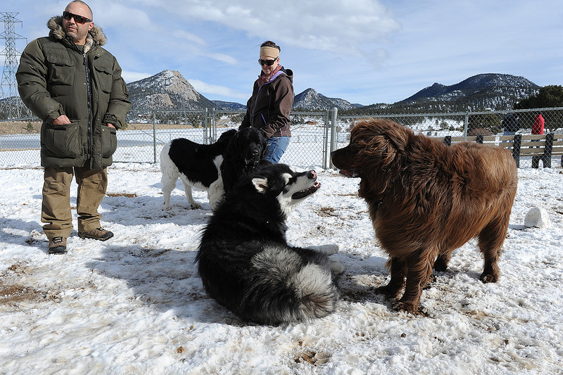 Walt Hester | Trail Gazette<br /> Newfie owners Dave and Kristie Geisler of Lufi, Texas, and their dogs, Murre, Gunner and Berna, seem amazed by Mukluk, a 198-pound Alaska Malamute, at the dog parl on Wednesday. The Geislers said their dogs weren't used to playing ith dogs bigger then themselves.