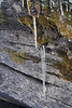 Walt Hester | Trail Gazette<br /> Icicles hang off of rocks and green moss along the trail to Bridal Veil Falls on Sunday. A walk in March will reveal both the end of winter and start of spring.
