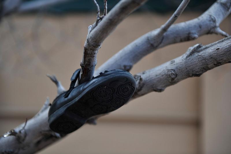 Walt Hester | Trail Gazette<br /> A shoe hangs from a tree branch along the Riverwalk near Riverside Drive on Monday.