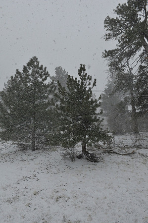 Walt Hester | Trail Gazette<br /> A fast-moving storm dumps two inches of snow on Estes Park on Sunday afternoon. Snow totals in Rocky Mountain National Park are several times what they were last year and, in places, 130 percent of the 30-year average.