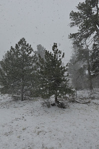 Walt Hester | Trail Gazette A fast-moving storm dumps two inches of snow on Estes Park on Sunday afternoon. Snow totals in Rocky Mountain National Park are several times what they were last year and, in places, 130 percent of the 30-year average.