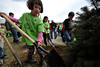 Walt Hester | Trail Gazette<br /> Six-year-old Tobi Ho helps plant a new tree during Arbor Day festivities at the Estes Park Elementary School on Friday. Five trees in total were planted during the annual celebration of trees.