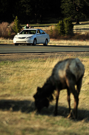Walt Hester<br /> A visitor to Rocky Mountain National Park stops to photograph bulls with new antler growth on Tuesday. The evening sunshine was replaced on Wednesday by low, wet snowy clouds and occasional thunder.