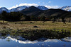 Walt Hester | Trail Gazette<br /> Bull elk graze their way through Horseshoe Park on Tuesday evening as the calm sky reflects in a temperary pond. All that changed as a winter storm rolled into Estes Park on Wednesday.