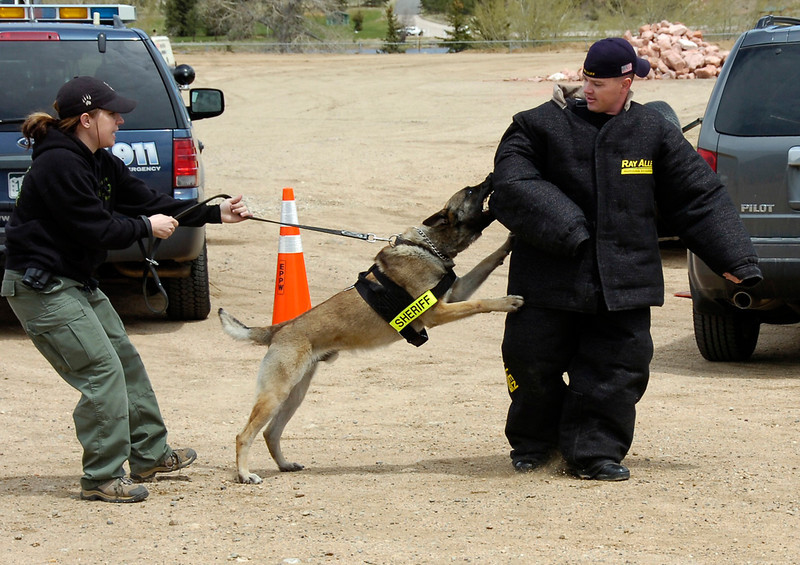 Police dog Grendel is pulled off a mock suspect during a demonstration Saturday at the annual police department safety fair.