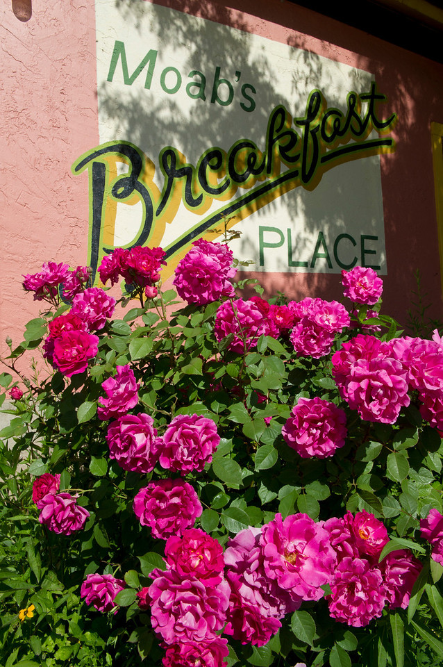 Walt Hester | Trail Gazette<br /> Roses bloom outside Moab's Jailhouse Cafe. Good enough for a last meal, boasts their menu, which includes a variety of omelets, diner breakfasts and their famouse ginger pancakes with Dutch apple butter. The cafe only serves breakfast and is open 7 am - noon.