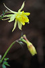Walt Hester | Trail Gazette<br /> Moisture hangs on the first new columbines along Elkhorn Avenue on Wednesday. Unusually cool and snowy weather has hampered the usual planting of flowers along the downtown street.