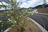 Walt Hester | Trail Gazette<br /> A newly-planted tree blossoms in the transportation hub parking lot on Wednesday. The hub is close to completion as the summer visitors season hits its stride.