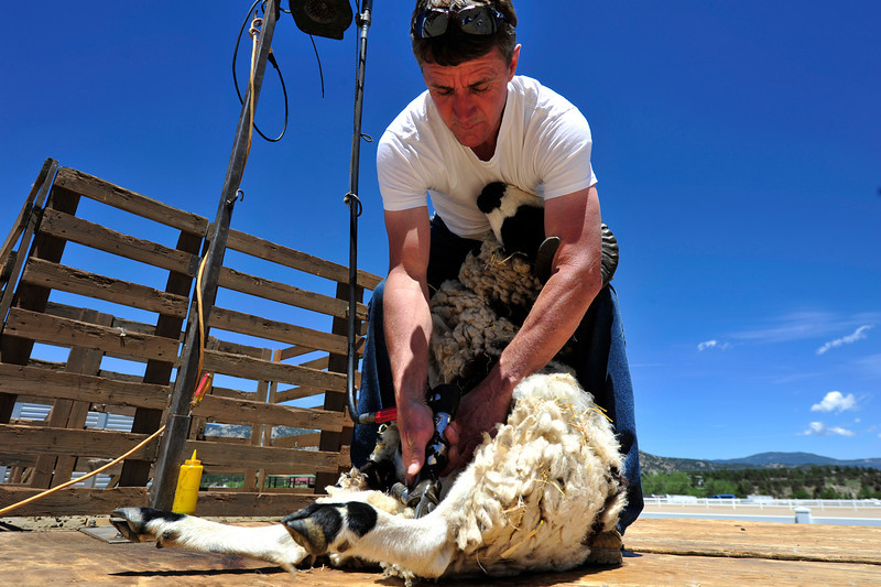 Walt Hester   Trail Gazette<br /> Ton Barr of Sanford Colo. demonstrates how to sheer a Jacobs sheep in the blink of an eye at the Wool Market on Sunday. Demos, competitions, fiber and fun abounded at thetwo day weekend event.