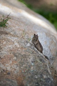 Walt Hester | Trail-Gazette A small sqarrel keeps an eye on activities near the Fall River entrence to Rocky Mountain National Park on Tuesday.