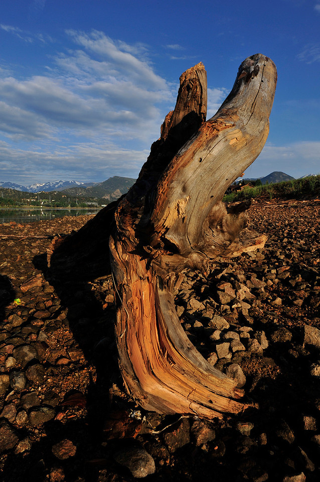 Walt Hester | Trail Gazette<br /> A large piece of driftwood sits along the edge of Lake Estes on Wednesday. The wood was exposed as the lake was drawn down.