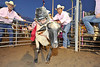 Walt Hester | Trail Gazette<br /> A sheep and rider charge out of the chute, bump the photographer and knock down the rodeo clown during the Muttin Bustin' on Wednesday. The event is a chance for children to participate in the Rooftop Rodeo.