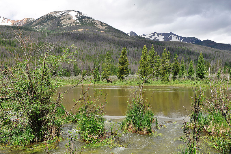 Walt Hester | Trail Gazette<br /> The Colorado River makes an unusually wide path through the west side of Rocky Mountain National Park on Sunday. Winter and spring snows were so heavy that river flows remain very high and swift all over the park.