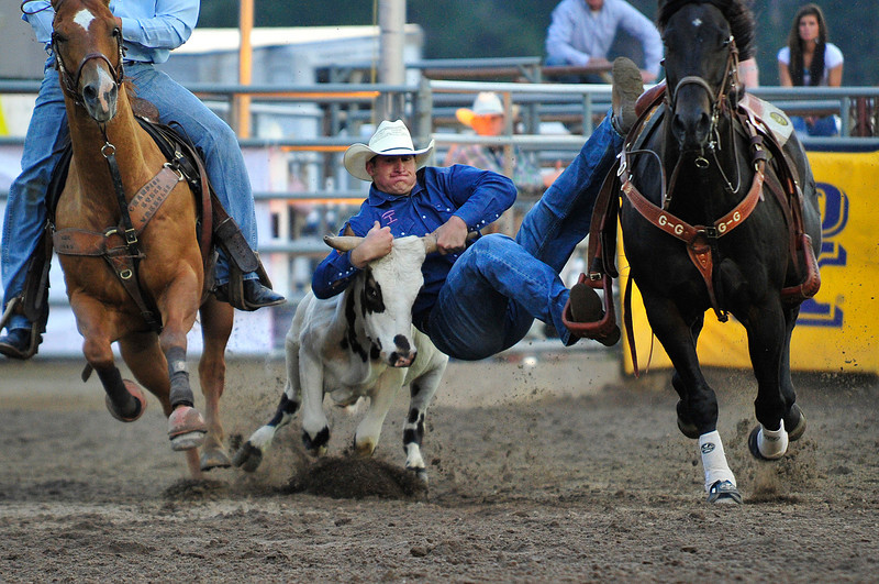 Walt Hester | Trail Gazette<br /> John Franzen pulls down a steer in 5.6 seconds during Wednesday's Rooftop Rodeo. Franzen is among the leaders in the steer wrestling so far.