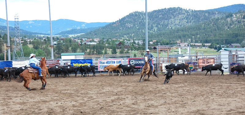 A steer is cut from the herd during July 9 competion of the Rocky Mountain Team Penning Association competiton held in Estes Park.