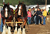 Walt Hester | Trail Gazette<br /> A pair of Clydesdales from Tendergrass Stables prepares for a tug-o-war with first responders on Thursday. The horses seemed to take it easy on the humans in the first round before yanking the first reponders off of their feet, seemingly with no effort.