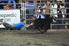 Walt Hester | Trail Gazette<br /> Anthony Leva dives for a ribbon on the back of a calf on Saturday night. Children chased calves around the Stanley Fairgrounds arena to retrieve the ribbons nd exchange them for prizes.