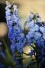 Walt Hester   Trail Gazette<br /> Bright flowers decorate Elkhorn Avenue on Wednesday evening.