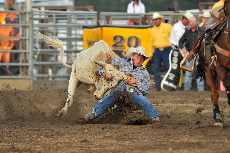 Walt Hester | Trail Gazette<br /> A steer wrestler tries to ground his animal during Thursday's Rooftop Rodeo. While steer wrestlers tend to be larger cowboys, the steers will out-weigh them by 100 pounds or more.