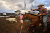 Walt Hester | Trail Gazette<br /> A steer wrestlet braces for the acceleration as his steer bursts from the chute on Friday.  The compact, pwerful horses have been clocked at 55 miles per hour, and can reach top speed in just a few strides.