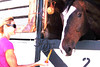 A carrot -- and no stick -- is offered to a horse by an owner.