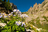 Walt Hester | Trail-Gazette<br /> Columbines bloom above Emerald Lake. Rocky Mountain National Park is expecting an influx of visitors over the long, warm Independance Day holiday weekend.