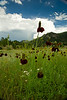 Walt Hester | Trail Gazette<br /> Flowers flurish along Carriage Drive as rain clouds build to the east of Estes Park.