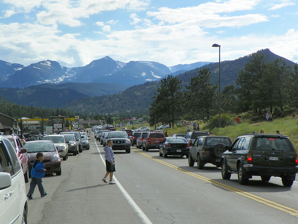 The Estes Park Police Department was called out to direct traffic Wednesday morning after a black bear was spotted in a tree near the road. Motorists blocked traffic as many scrambled to get a glimpse of the bear and to take a photograph.