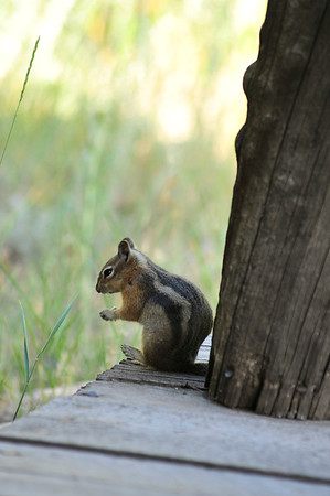 Walt Hester | Trail Gazette<br /> A squirrel looks over its dinner on Tuesday. They are cute, but they will bite, so admire the little critters from a distance.