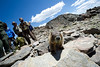 Walt Hester | Trail Gazette<br /> A marmot gains the attention of park volunteers on Twin Sisters on Monday. The famous high-altitude rodents have no fear of humans, to the dismay of park officials, and the delight of visitors.