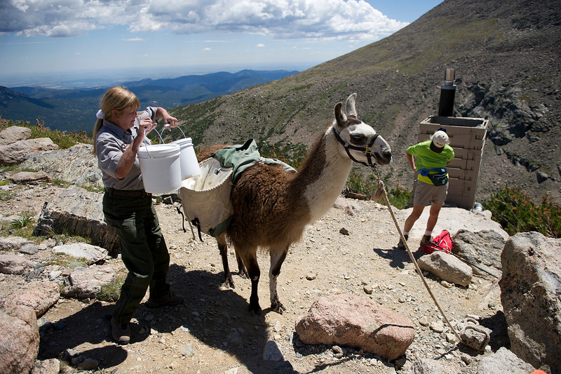 Walt Hester | Trail Gazette<br /> Marcia Cautu loads up Lloyd the llama at the Chasm Junction privy on Monday. Cautu and her wooly assistants hike to the remote toilets in the park to clean them and haul out the solid waste.
