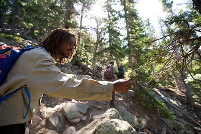 Walt Hester | Trail Gazette Melake Getabecha of Groundwork Denver identifies a variety of evergreen by touch on Twin Sisters last week. Groundwork Denver, an organization that recognizes and fosters leadership in urban youth, was assisting park research on the Limber Pine.