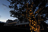Walt Hester | Trail Gazette<br /> Lights decorating trees at the Stanley Hotel light the way as the light of day fades from Wednesday's sky. The famous hotel has attracted visitors for more than a century.