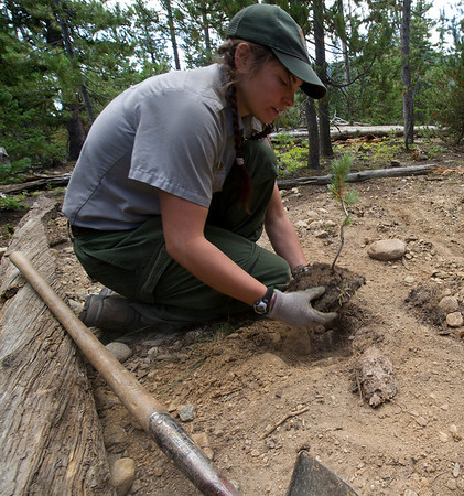 Walt Hester | Trail Gazette<br /> Christina Thompson replants a tree over a recently relocated privy near Ouzal Falls on Thursday, August 18.