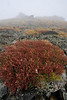 Walt Hester | Trail Gazette<br /> Vegitation near Trail Ridge Road on Wednesday dons rusty hues as autumn approaches. The growing season on the tundra is very short, as little as 10 weeks in some years.