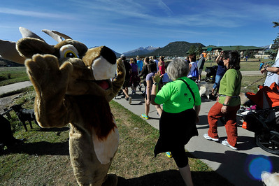 Walt Hester | Trail Gazette An unusually fluffy bull sends the runners on their way around Lake Estes on Saturday.