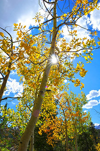 Walt Hester | Trail Gazette Afternoon sunshine bursts through aspens in Rocky Mountain National Park on Tuesday. This weekend should be an excellent time to see the fall colors in and around the national park.