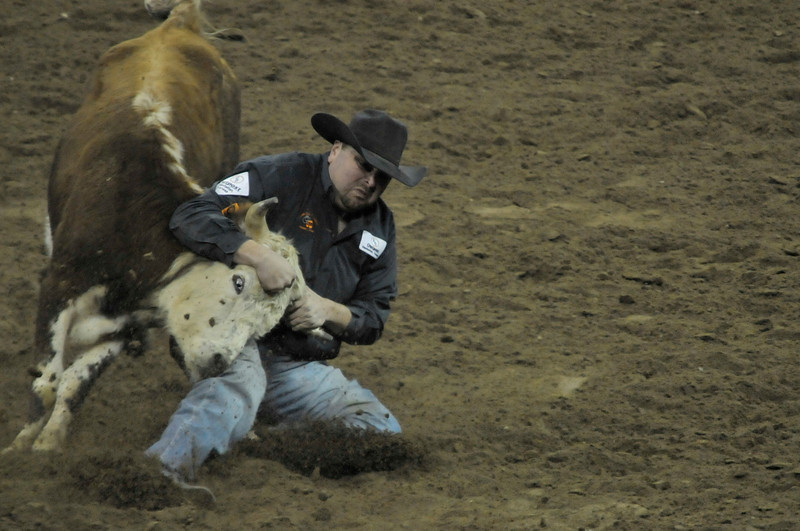 Walt Hester | Trail-Gazette<br /> A big cowboy wrestles a steer during the National Stock Show Rodeo on Sunday. Kellsie will be the face of rodeo in Colorado for the next year.