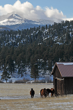 Walt Hester | Trail-Gazette<br /> Draft Horses huddle out of the wind in front of the hay barn at MacGregor Ranch on Wednesday.