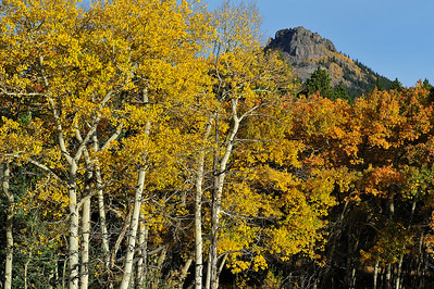 Walt Hester | Trail Gazette Aspens and the Estes Cone create a pleasant view along HWY 7 on Wednesday. Some aspens are hanging on to their golden leaves, but many are letting go as the season progresses.